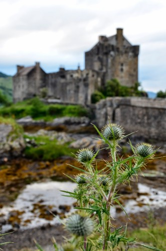 THISTLE AND CASTLE